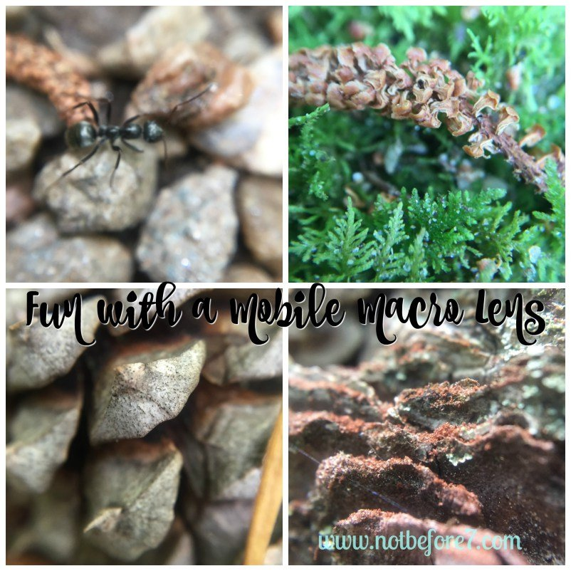 Fun and easy nature photography with this macro lens for your mobile device.